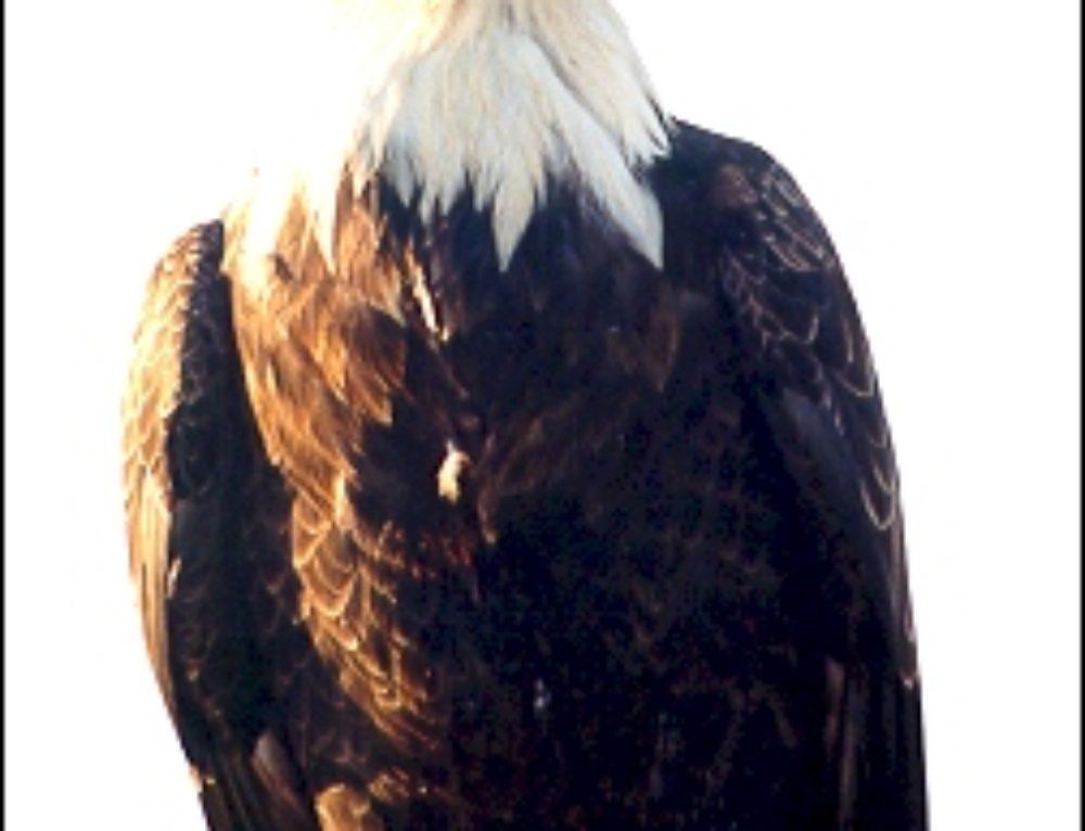 Birding In Southern Oregon-The Klamath Basin